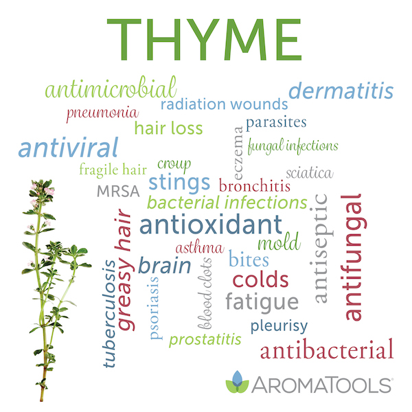 Photo of Spotlight on essential oil: Thyme | AromaTools Blog